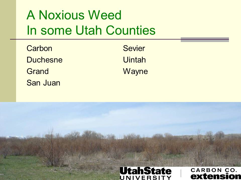 A Noxious Weed In some Utah Counties
