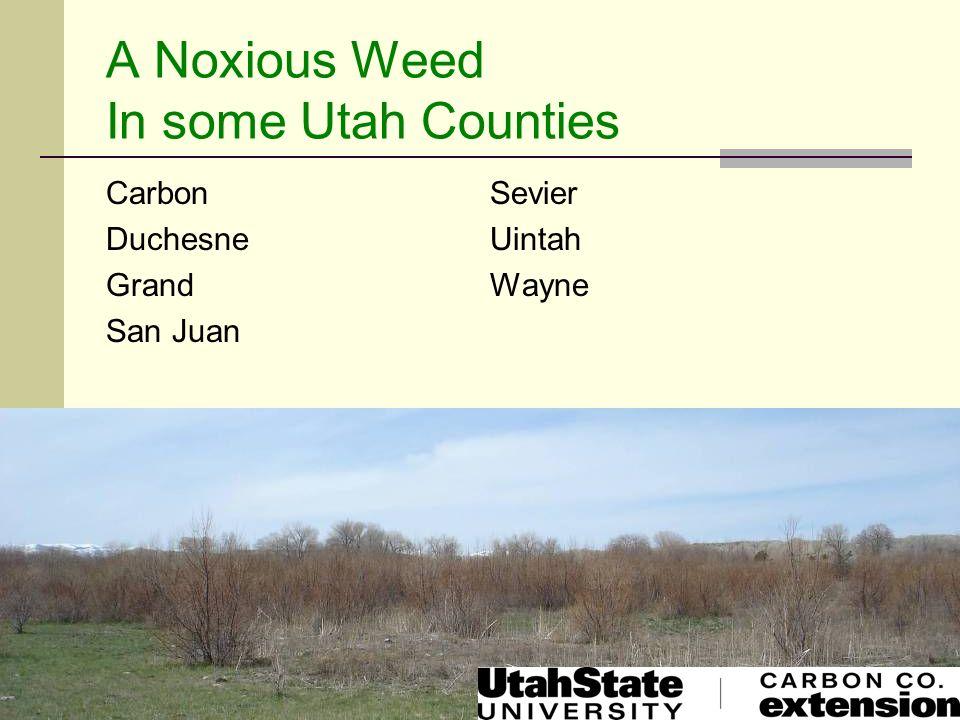 A Noxious Weed In some Utah Counties