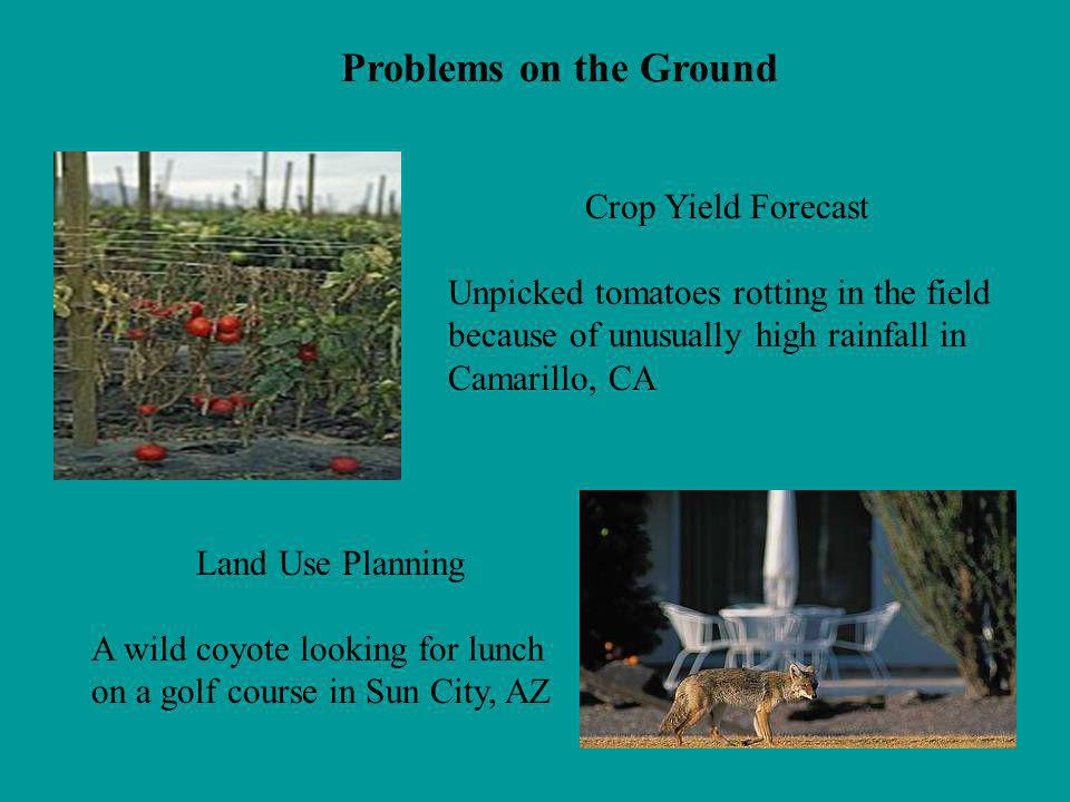 Problems on the Ground Crop Yield Forecast