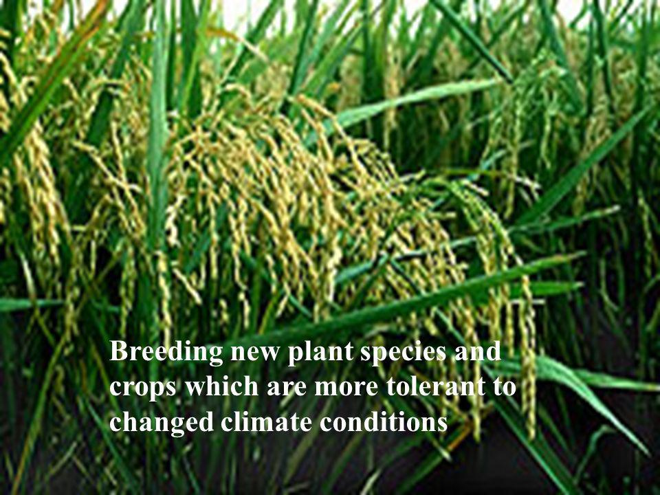 Breeding new plant species and crops which are more tolerant to changed climate conditions