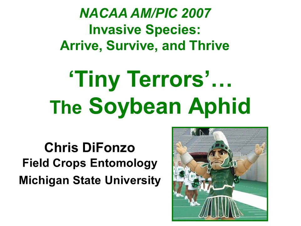 'Tiny Terrors'… The Soybean Aphid NACAA AM/PIC 2007 Invasive Species: