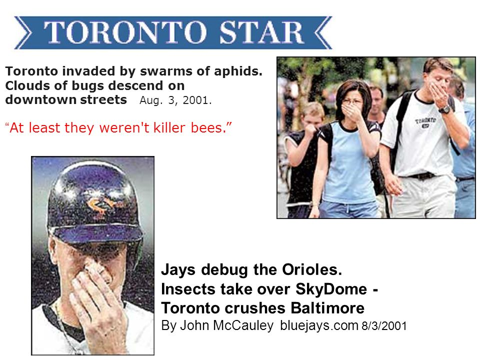 Jays debug the Orioles. Insects take over SkyDome -