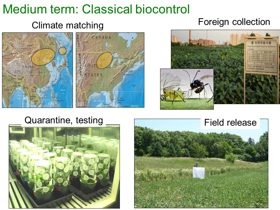 Medium term: Classical biocontrol