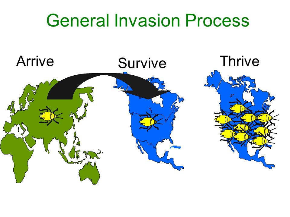 General Invasion Process