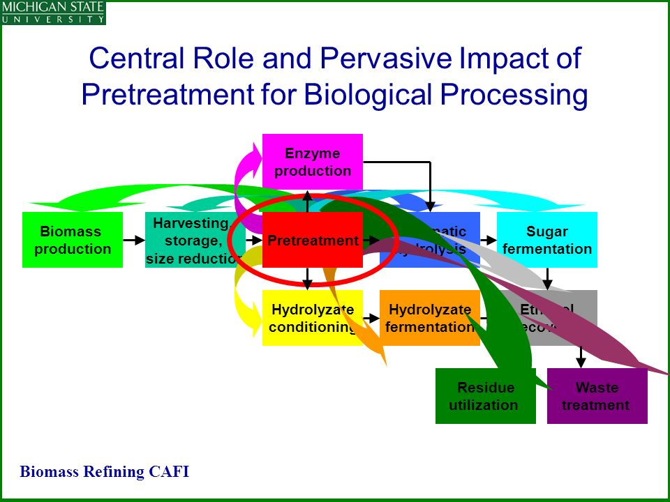 Central Role and Pervasive Impact of Pretreatment for Biological Processing