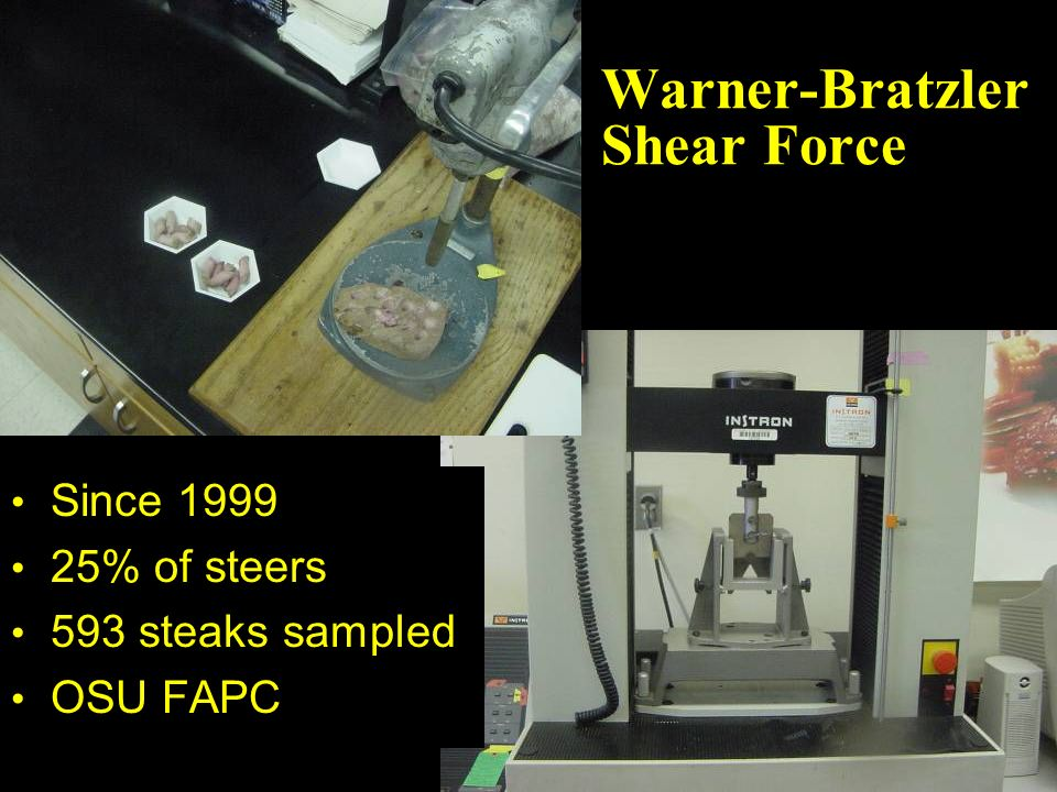 Warner-Bratzler Shear Force