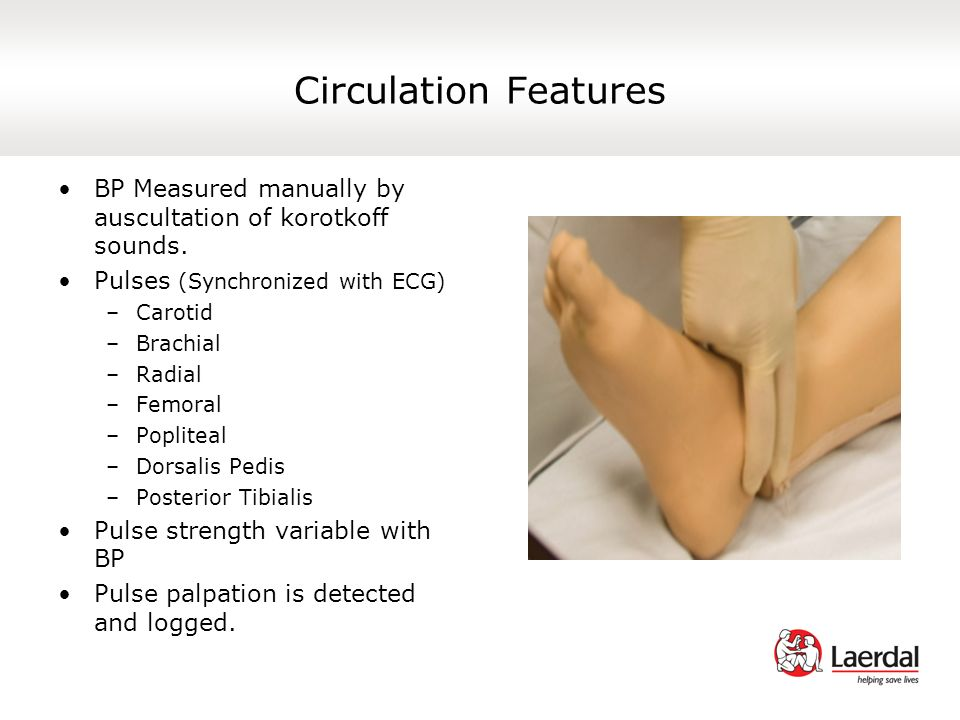 Circulation Features BP Measured manually by auscultation of korotkoff sounds. Pulses (Synchronized with ECG)