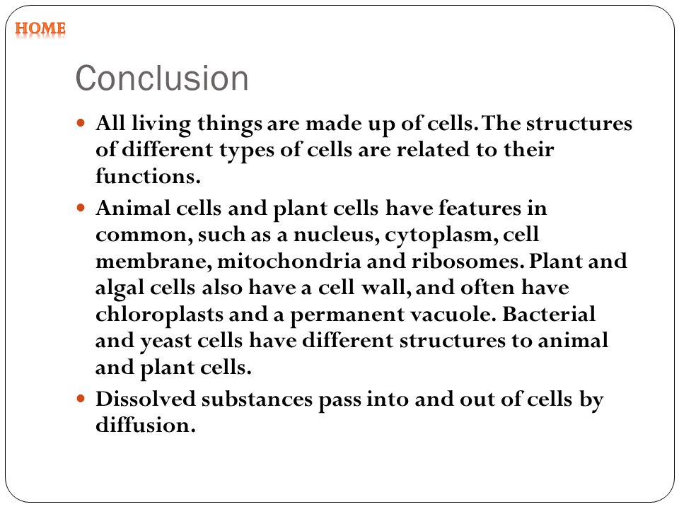 animal and plant cell conclusion There are two basic types of cells, animal cells and plant cells they have some common parts found in both and other parts that are unique to each essays related to cell structure and function 1 cell structures and organelles (lab.