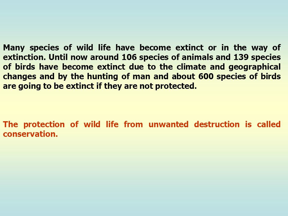 Many species of wild life have become extinct or in the way of extinction. Until now around 106 species of animals and 139 species of birds have become extinct due to the climate and geographical changes and by the hunting of man and about 600 species of birds are going to be extinct if they are not protected.