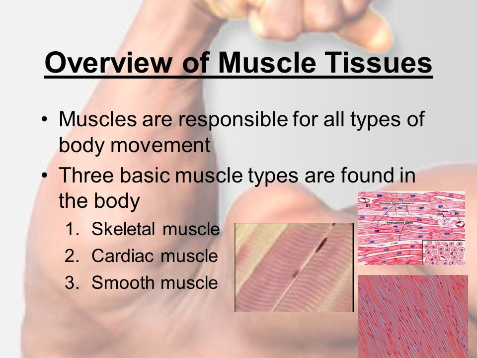 an overview of muscles