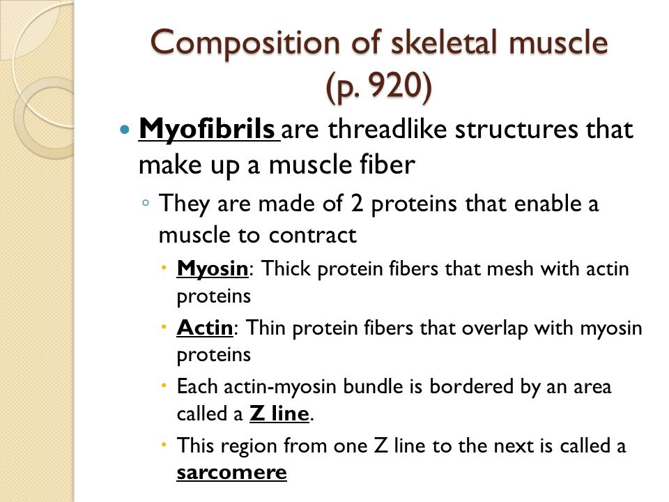 the process of creating proteins in the muscles Most people think of fibrous and muscle-rich foods when they hear the word  protein  cells can then recycle their amino acid parts to build new proteins   proteins assist in a complex process that transforms a group of cells.