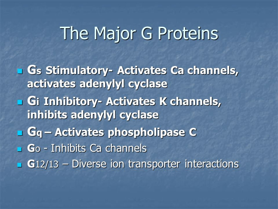 The Major G ProteinsGs Stimulatory- Activates Ca channels, activates adenylyl cyclase.