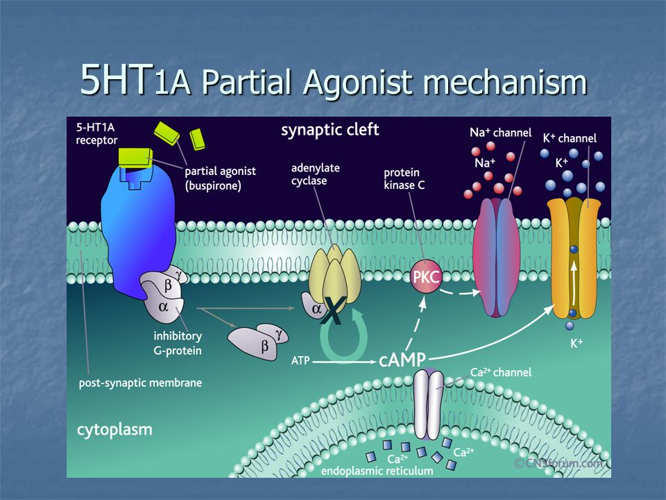 5HT1A Partial Agonist mechanism