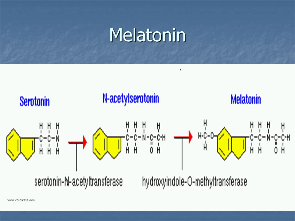 Melatonin vivo.colostate.edu