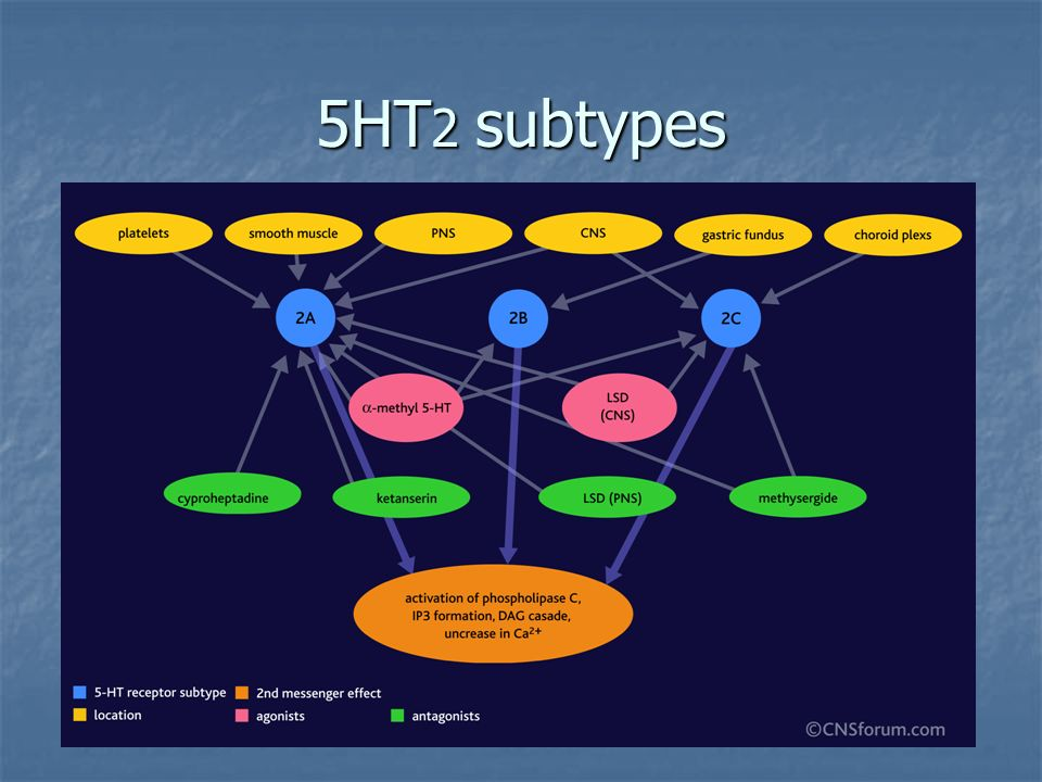 5HT2 subtypes