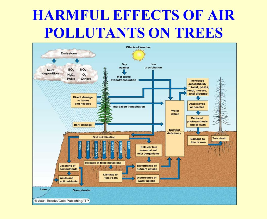 the harmful effects of air pollution Coal and air pollution coal has long been a reliable source of american energy, but it comes with tremendous costs because it is incredibly dirty the same chemistry that enables coal to produce energy—the breaking down of carbon molecules—also produces a number of profoundly harmful environmental impacts and pollutants that harm public health.