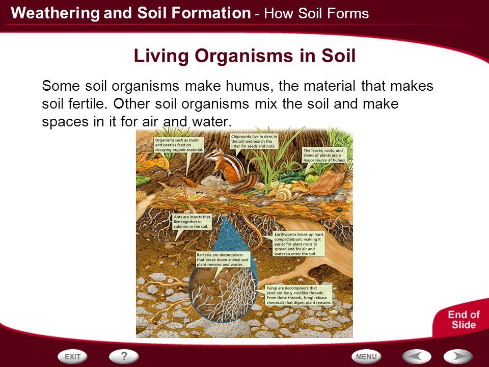 Table of contents rocks and weathering how soil forms for Things in soil
