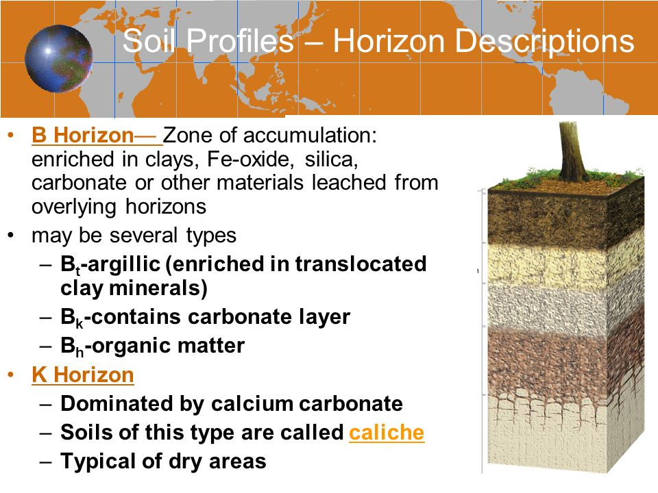 We can save 700 lira by not doing soil testing ppt for Soil zone of accumulation
