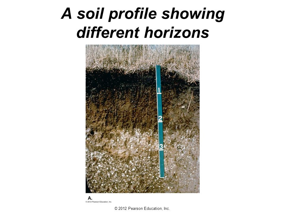 Earth science 13e tarbuck lutgens ppt download for Why are soils different