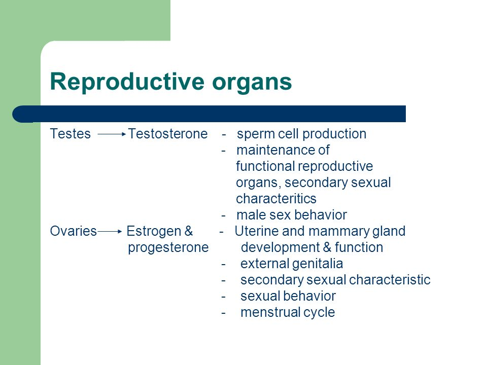 Reproductive organs Testes Testosterone - sperm cell production
