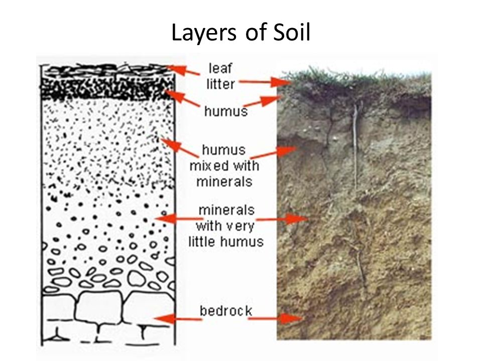 Layers of soil