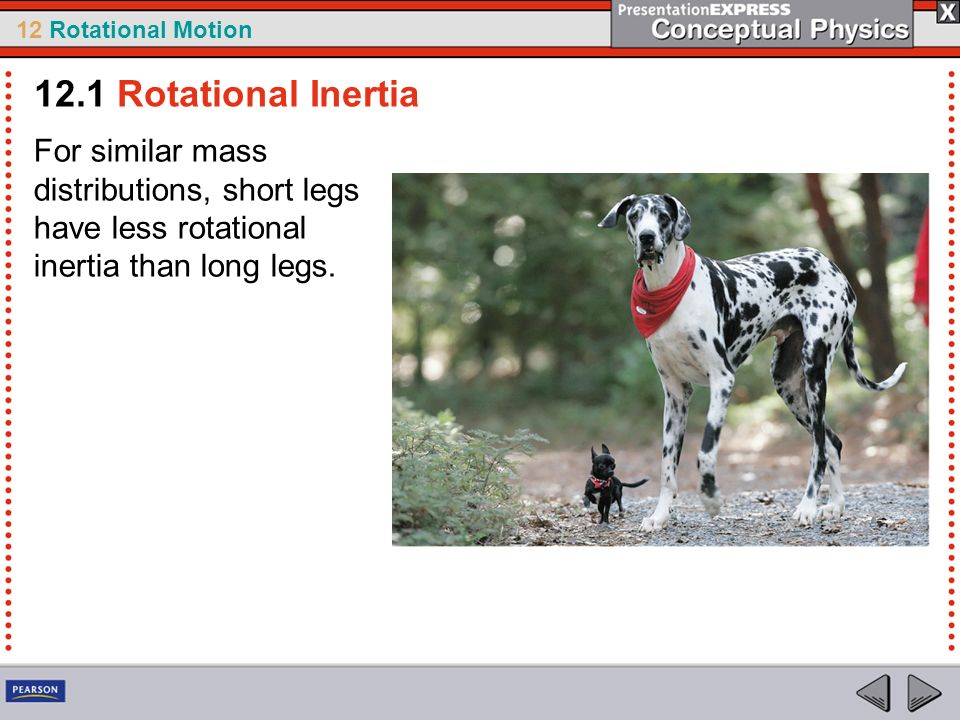 12.1 Rotational Inertia For similar mass distributions, short legs have less rotational inertia than long legs.