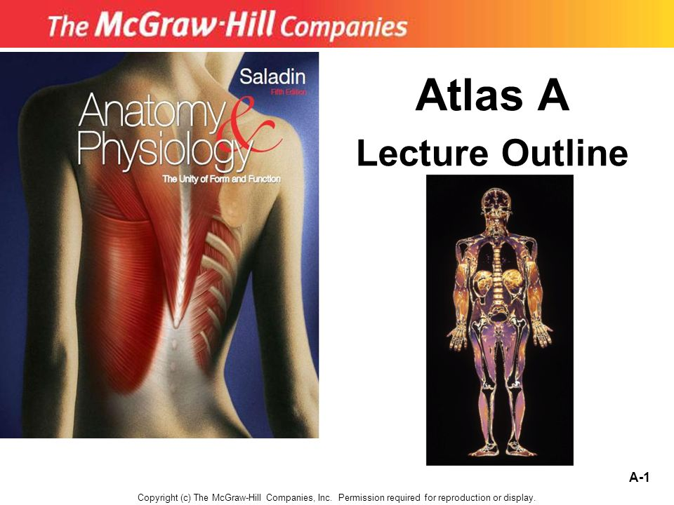 Atlas A Lecture Outline - ppt video online download