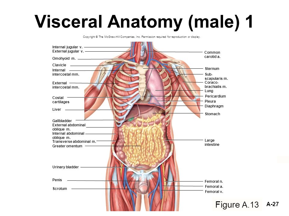 Ymca Level 3 Anatomy And Physiology 300 Question Revision 6571544 ...