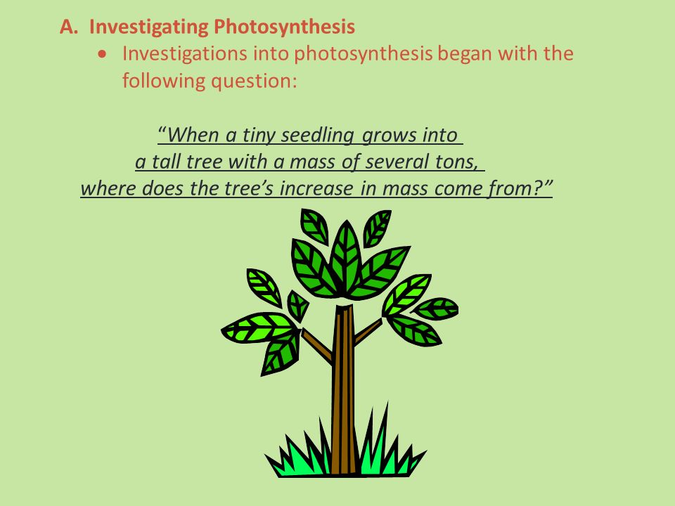 Investigating Photosynthesis: Discovering what plants need for photosynthesis