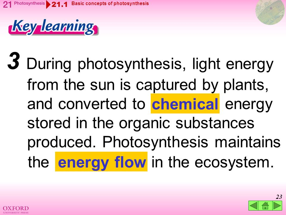 Basic requirements of photsynthesis