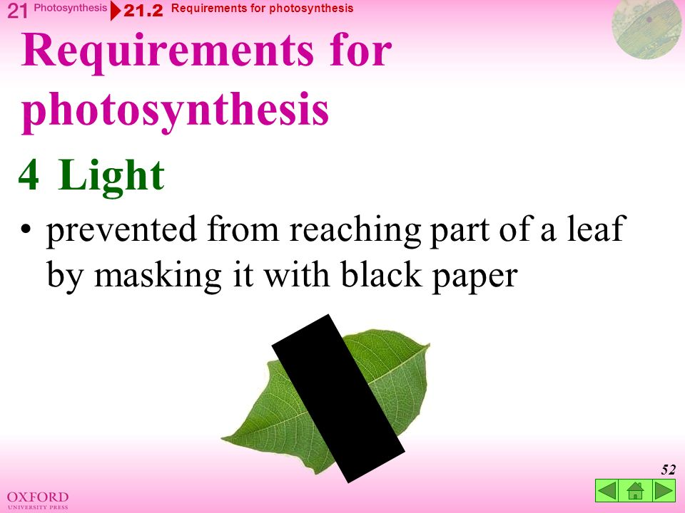 light reqirements for photosythesis For photosynthesis to occur, plants need sunlight, water, carbon dioxide and chlorophyll through the process of photosynthesis plants convert light energy into.