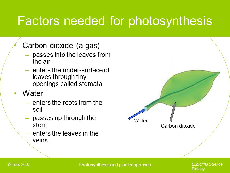 needed for photosythesis Even though it forms about 04% of the air, it is a needed factor in light-independent photosynthesis in higher concentrations,.