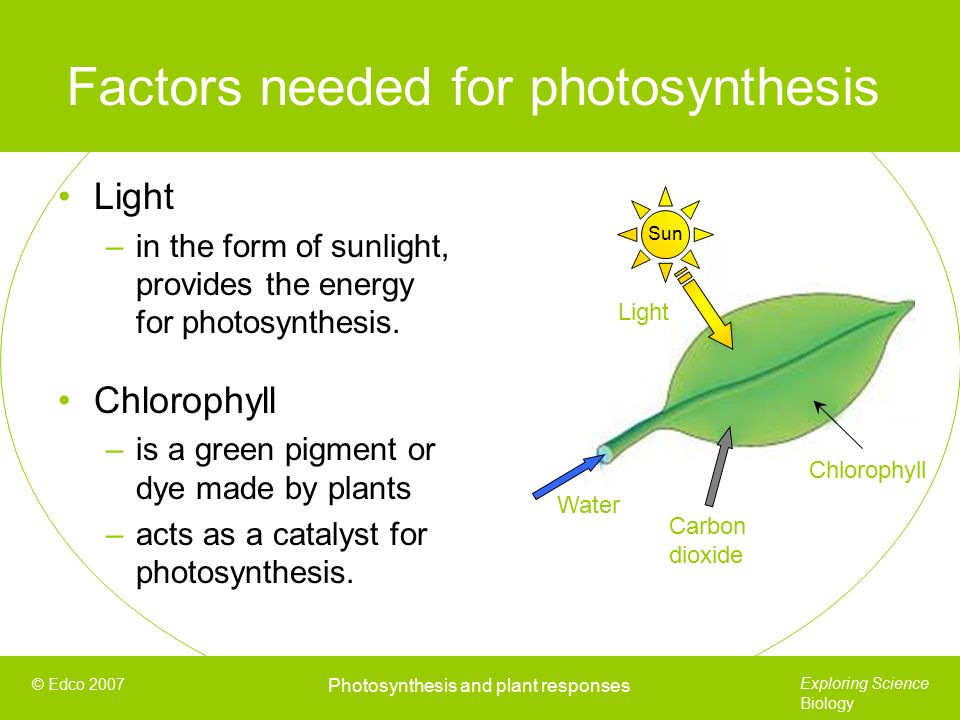 Sunlight is needed for photosynthesis - eschooltoday.com