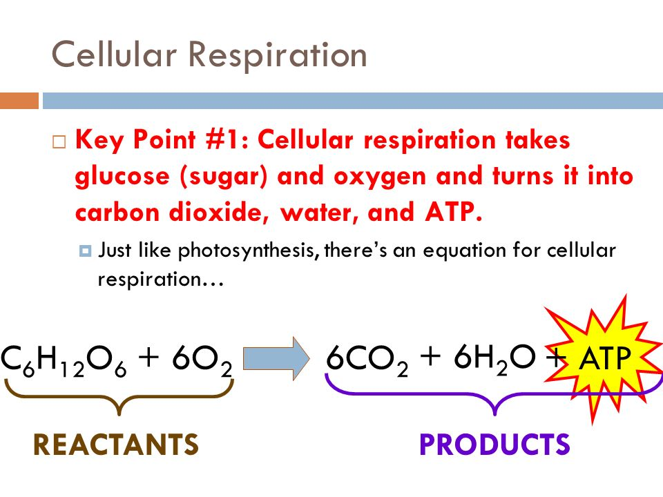 what will be your reactants and additionally programs from mobile phone respiration