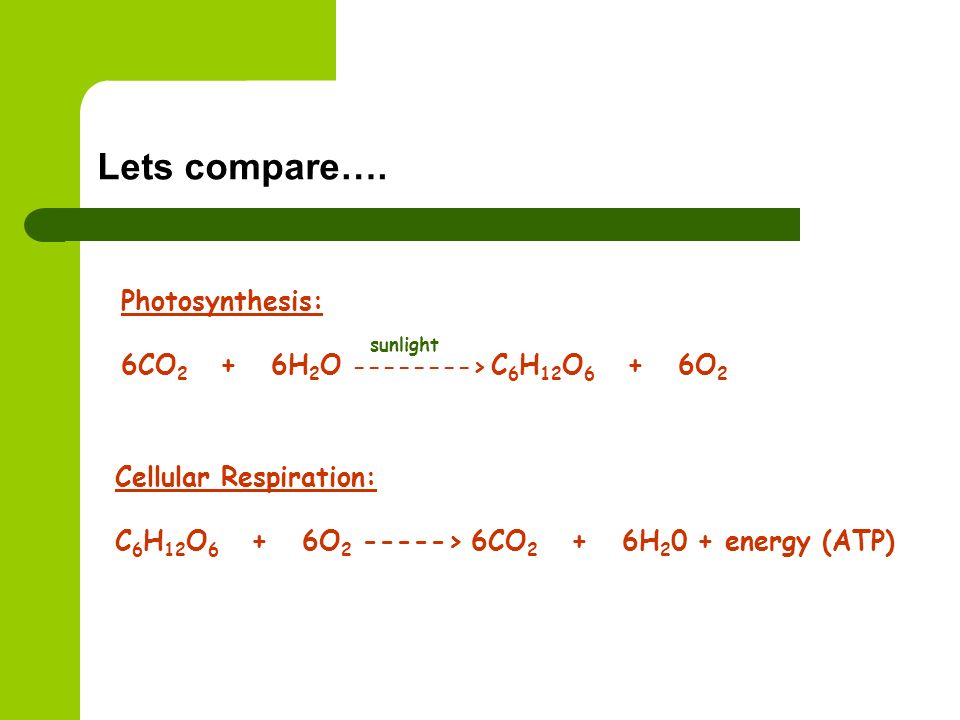 Lets compare…. Photosynthesis: 6CO2 + 6H2O > C6H12O6 + 6O2