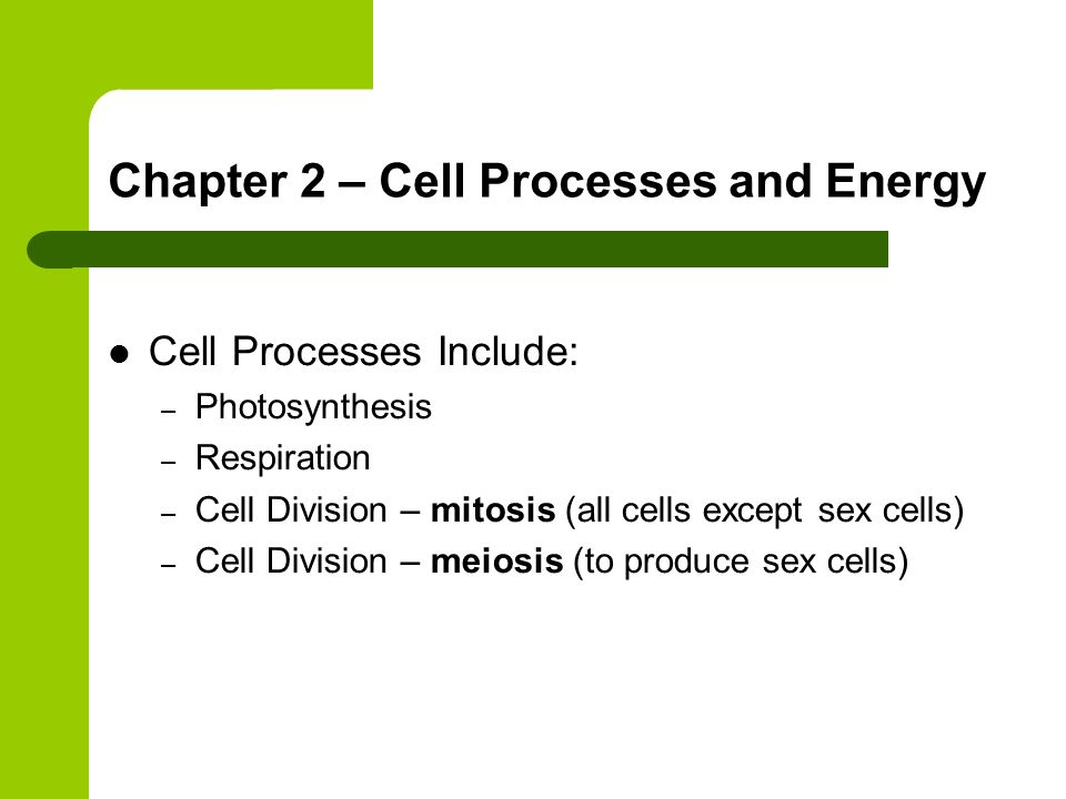 Chapter 2 – Cell Processes and Energy