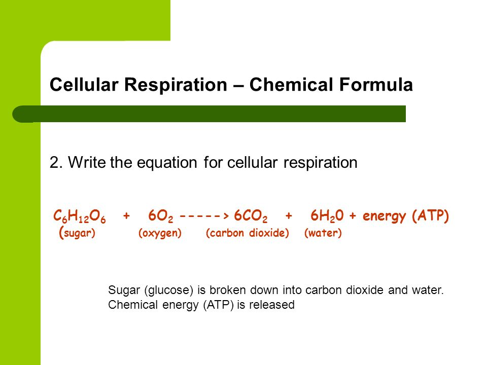 write the overall equation for photosynthesis using words Section 8-1 energy and life (pages 201-203) 16write the overall equation for photosynthesis using words as the basic energy source of cells active transport.