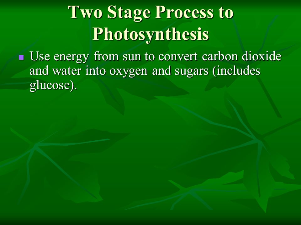 Two Stage Process to Photosynthesis