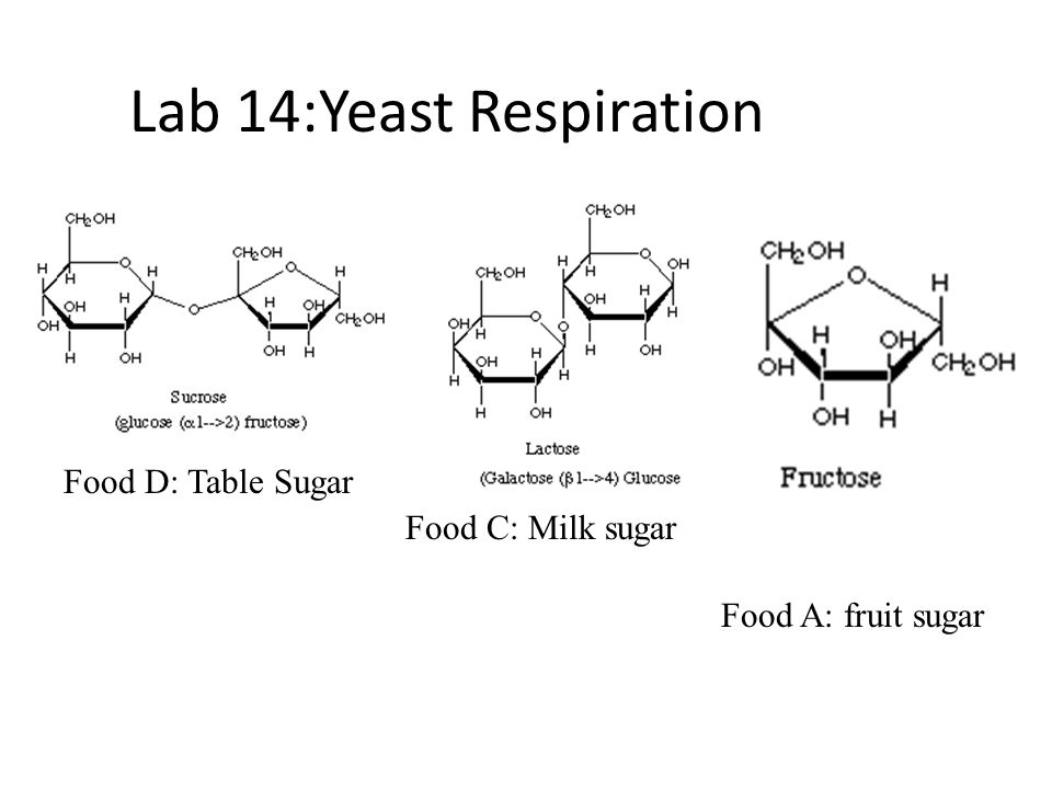 yeast respiration lab Anaerobic metabolism-1 laboratory inquiry cellular respiration in yeast in today's lab, you will investigate aspects of anaerobic respiration in a living model.