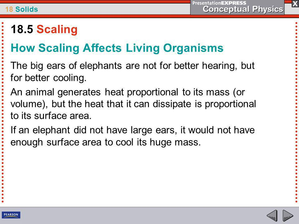 How Scaling Affects Living Organisms