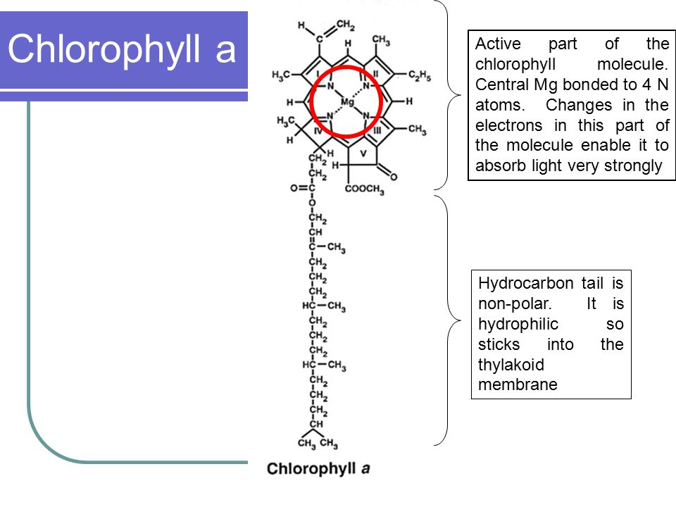 photosynthesis mrs martin ppt download