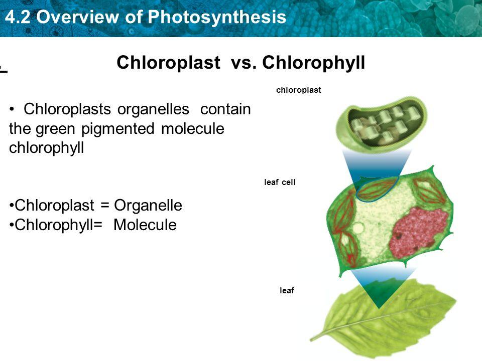 PHOTOSYNTHESIS. PHOTOSYNTHESIS KEY CONCEPT Photosynthesis ...
