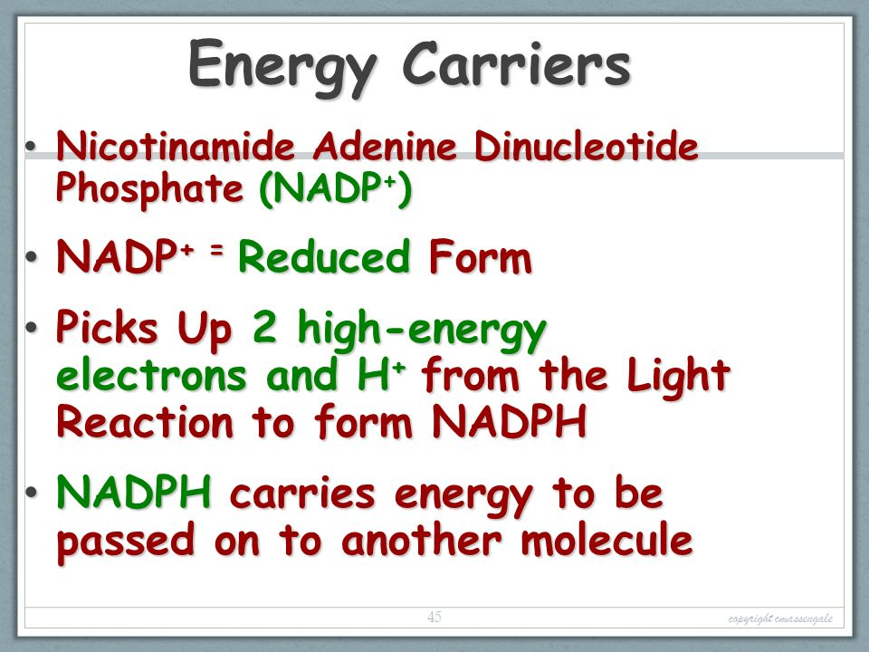Photosynthesis Energy & Life copyright cmassengale. - ppt download