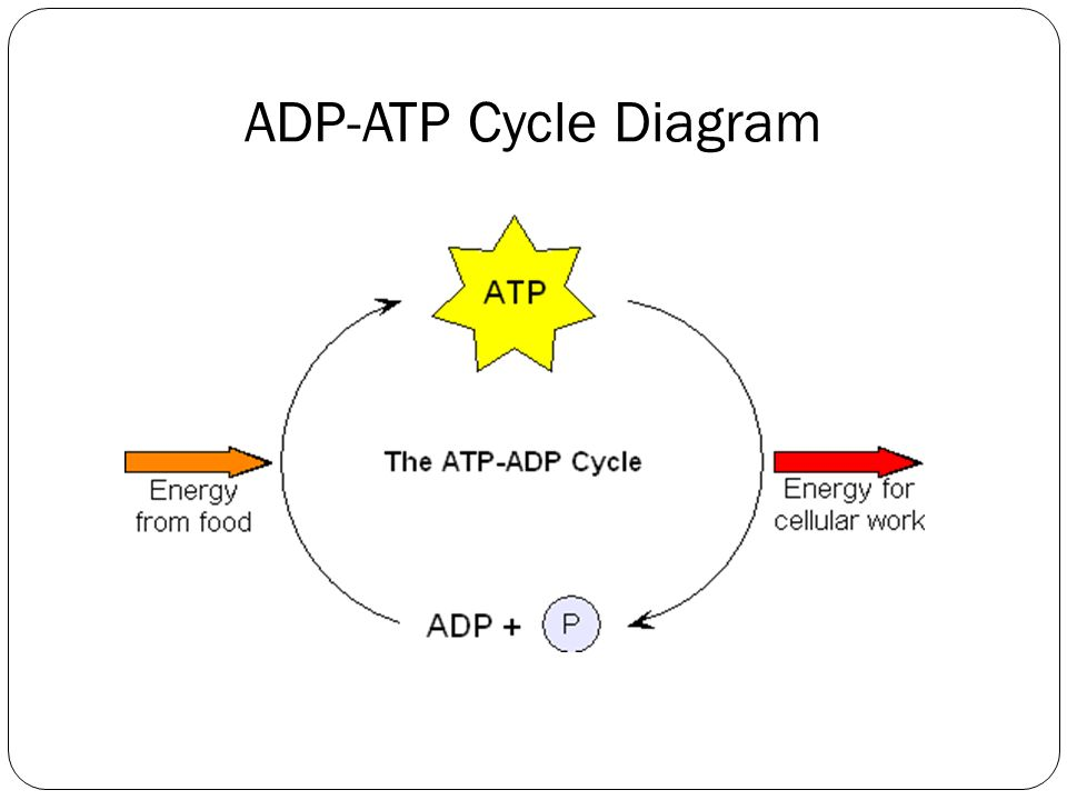 Atp Cycle Pictures To Pin On Pinterest Pinsdaddy