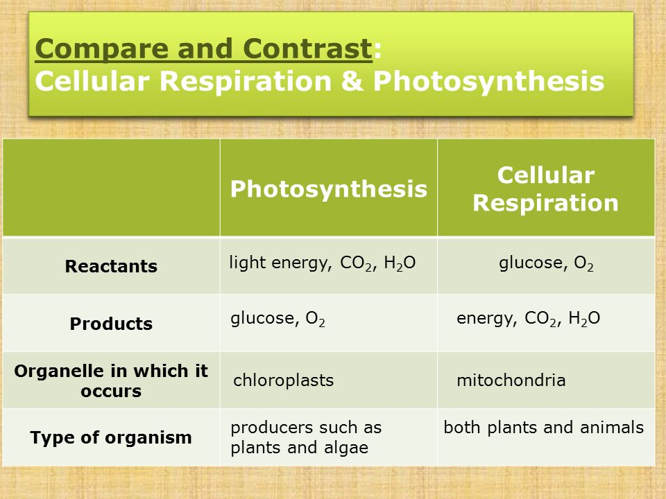 What is the difference between photosynthesis and cellular respiration