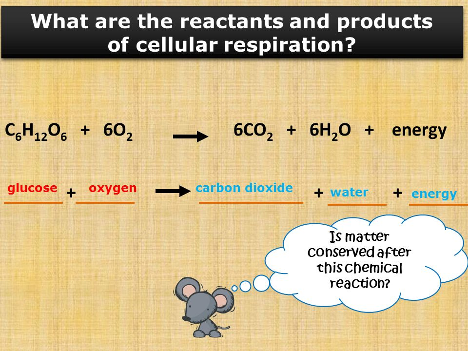Reactants and products of chemosynthesis