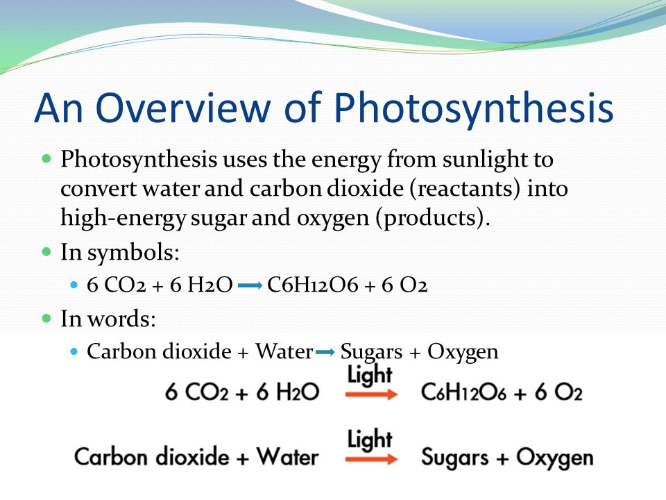 Chapter 8 Photosynthesis - ppt video online download