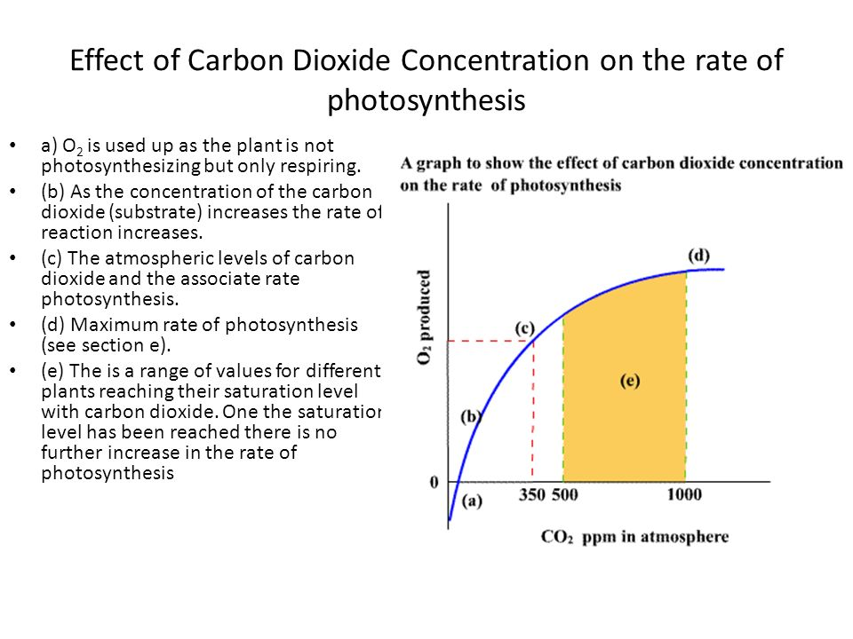 concentration of hydrogen carbonate on rate of photosynthesis The table shows the colour that the indicator turns at different levels of carbon dioxide concentration hydrogen carbonate rate of photosynthesis.