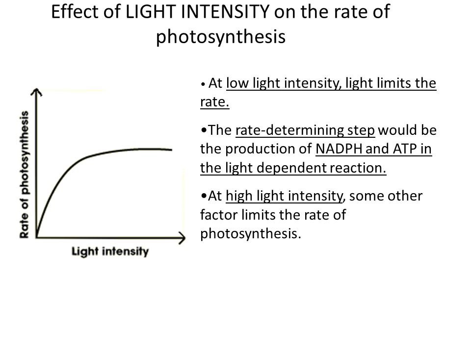 does light intensity affect rate photosynthesis There are five matters that affect the rate of photosynthesis: light intensity, temperature, co2, water, and the color of light in general in this experiment, the team aims to manipulate the color of light and control the following variables: co2.
