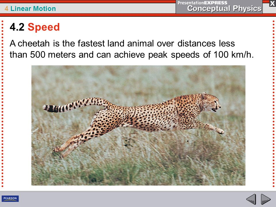 4.2 Speed A cheetah is the fastest land animal over distances less than 500 meters and can achieve peak speeds of 100 km/h.